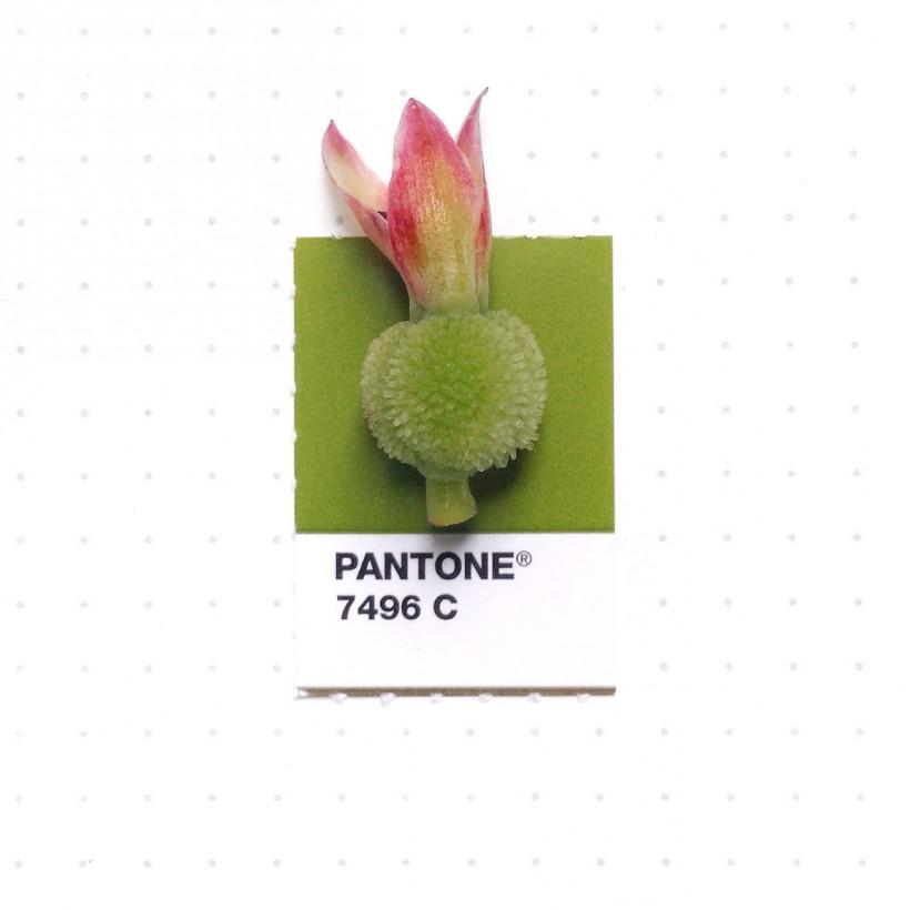 pantone-petit-objet-couleur-07