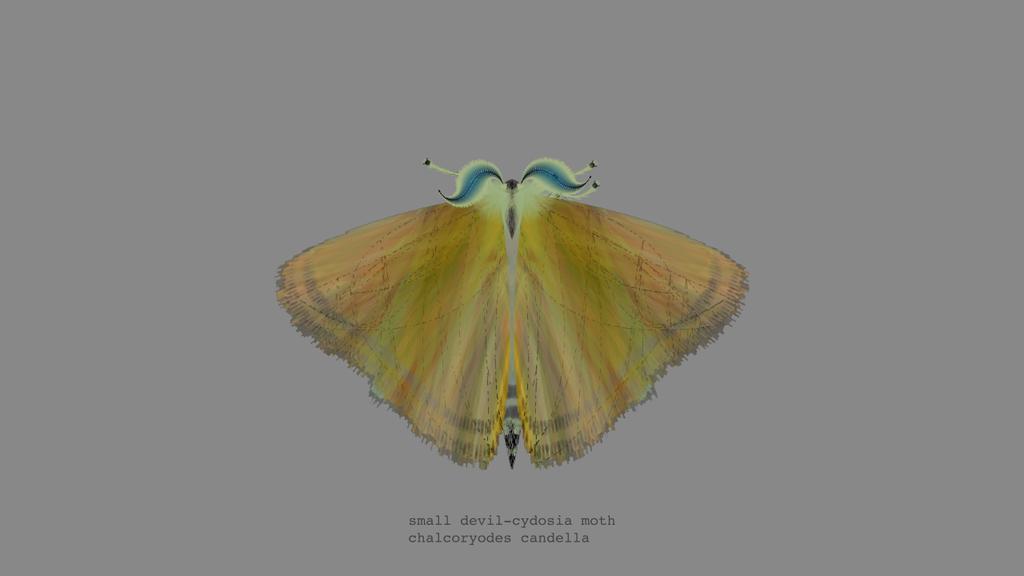 papillon-nuit-generateur-01