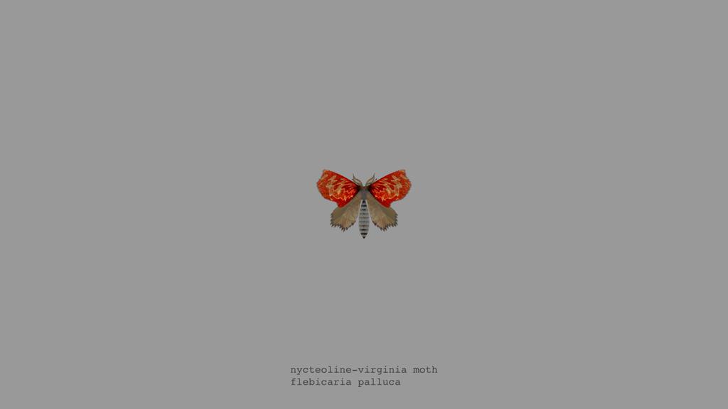 papillon-nuit-generateur-03