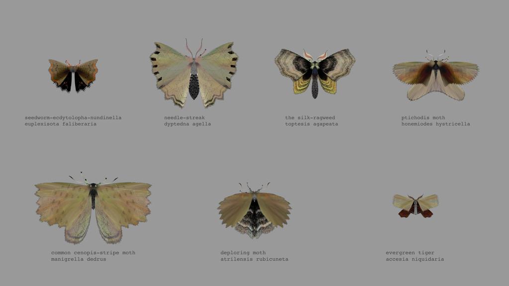 papillon-nuit-generateur-04