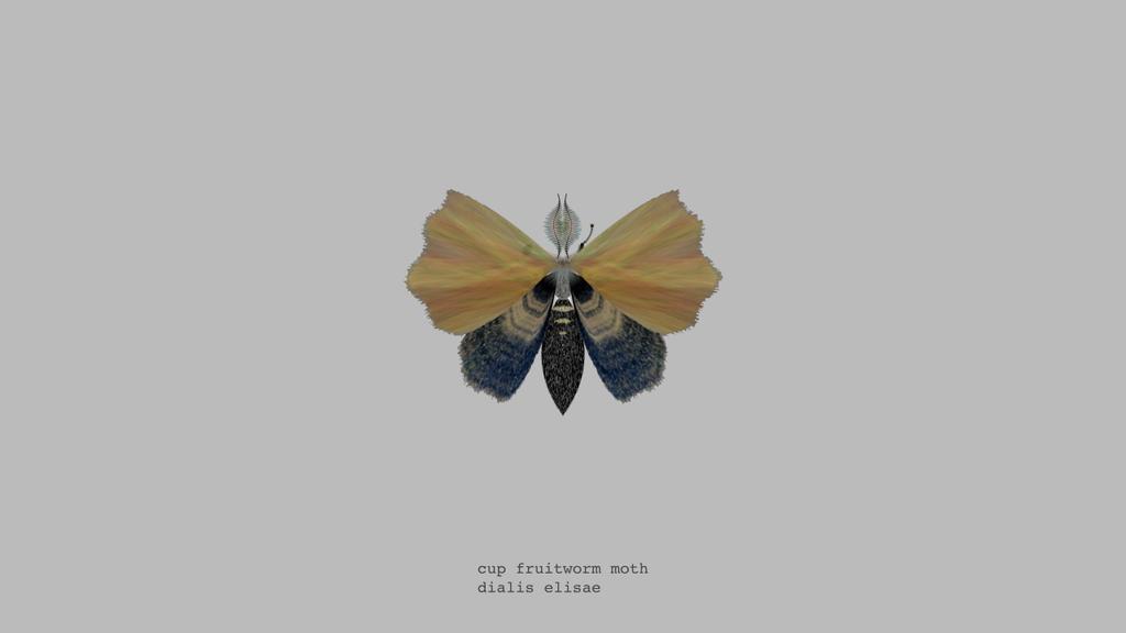 papillon-nuit-generateur-05