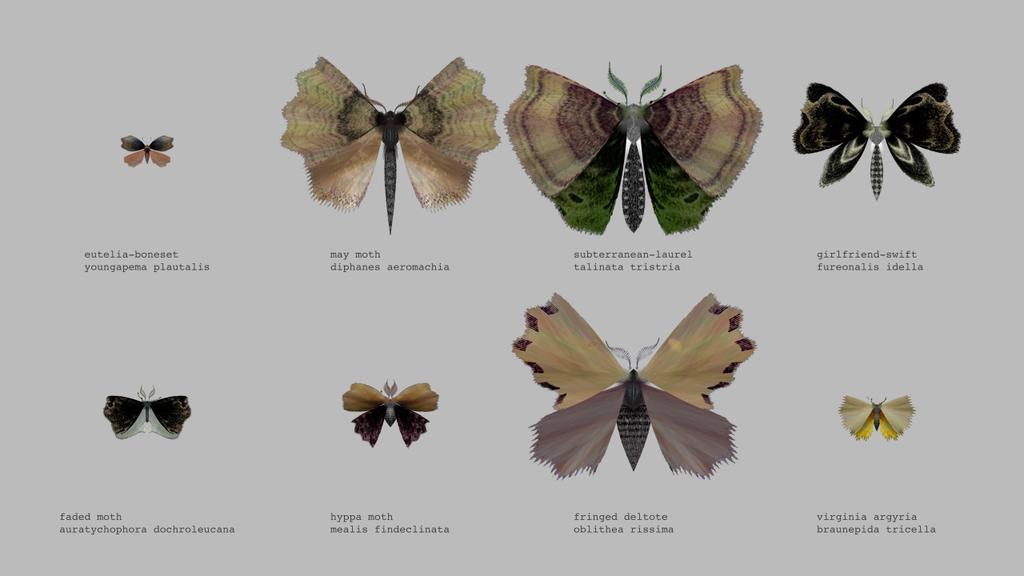 Un g n rateur de papillons de nuit - Duree de vie papillon de nuit ...