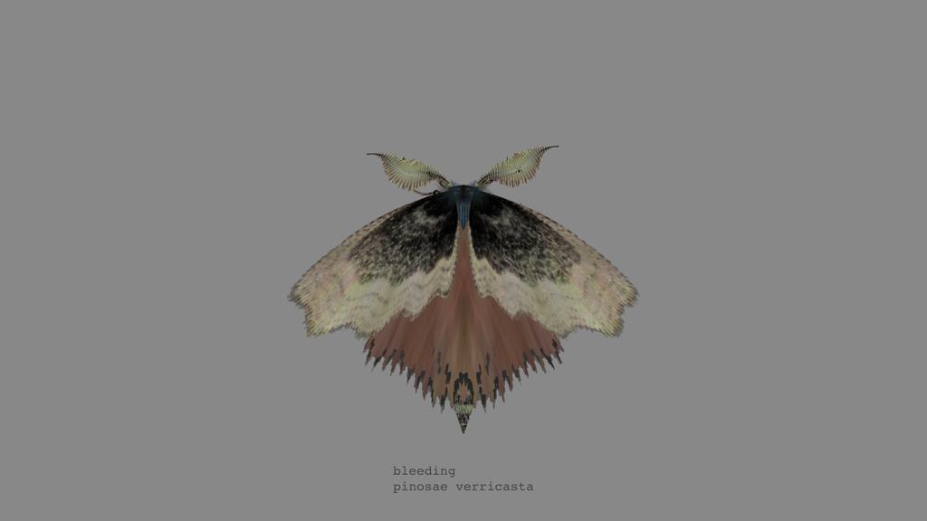 papillon-nuit-generateur-07
