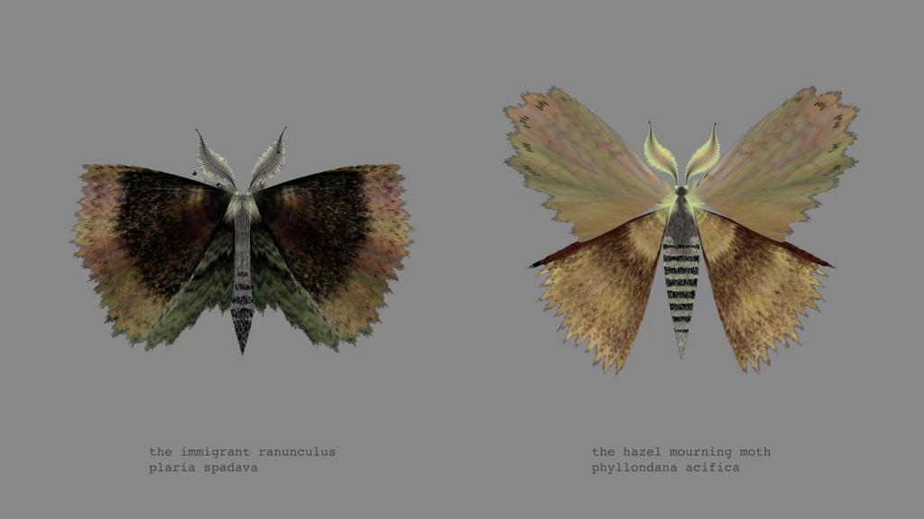 papillon-nuit-generateur-08
