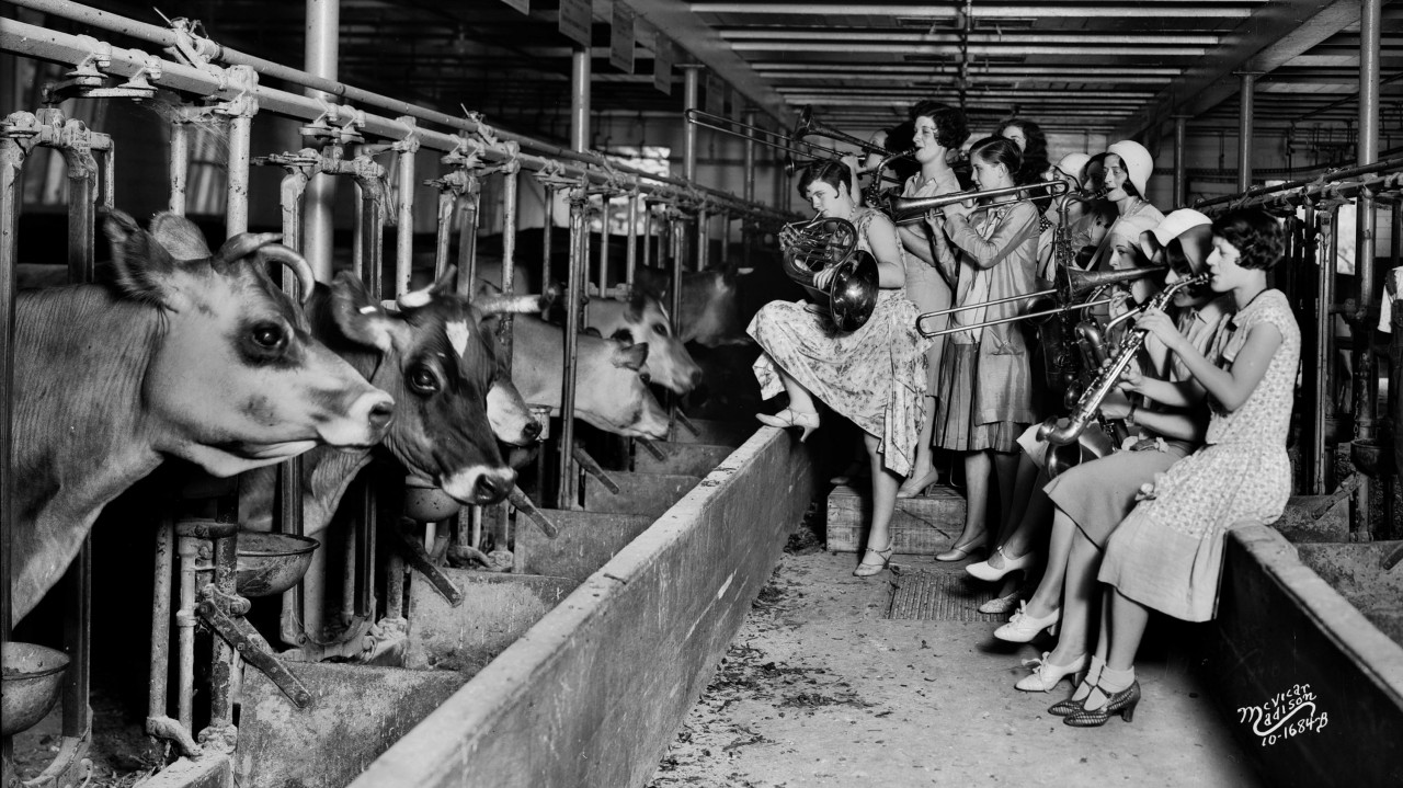 The-Ingenues-all-girl-band-and-vaudeville-act-cows-University-of-Wisconsin-experiment-music-boost-cows-milk-production-1930