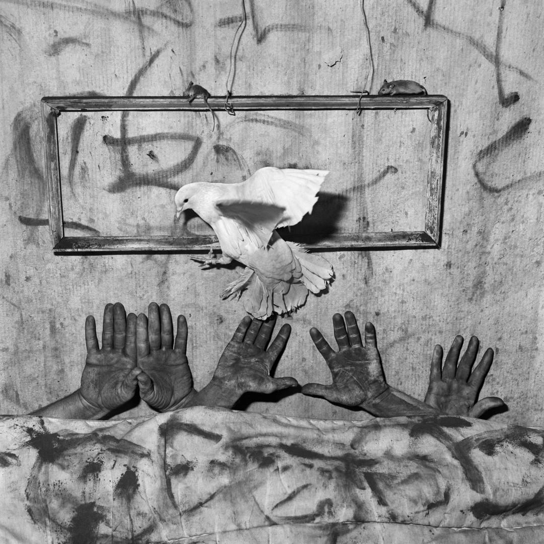 asylum-birds-ballen-02
