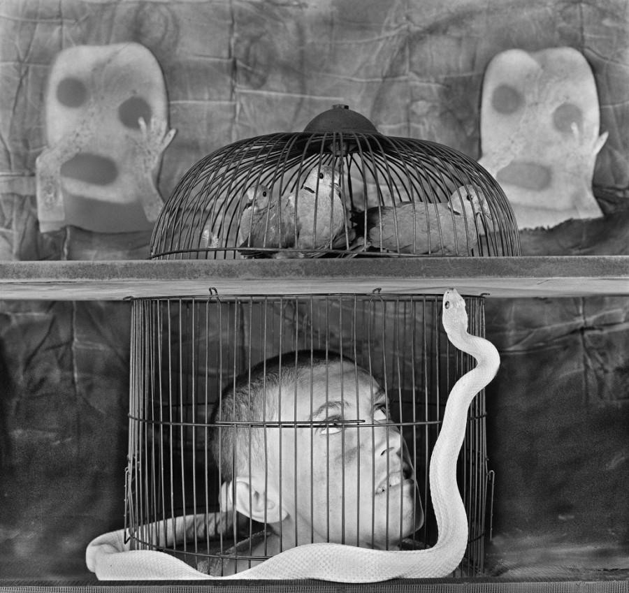 asylum-birds-ballen-03