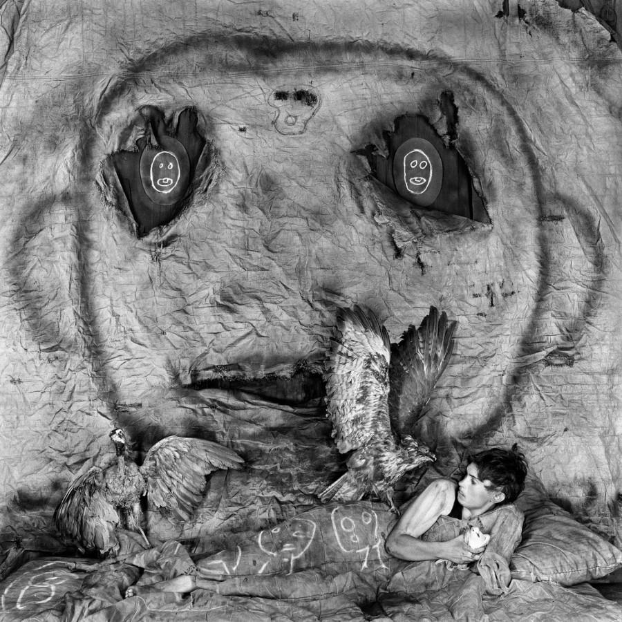 asylum-birds-ballen-04