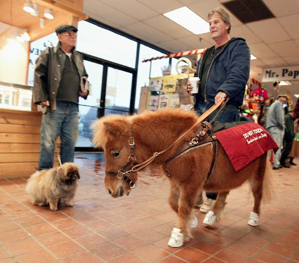 12/14/2002 -- Ellsworth, Maine -- Dan Shaw and his Guide Horse Cuddles make their way through a shopping mall.