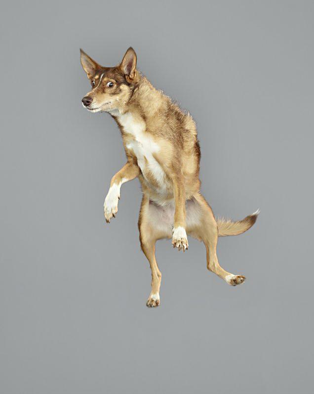 chien-saut-02