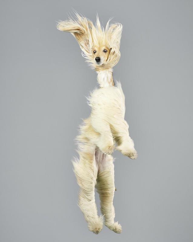 chien-saut-04