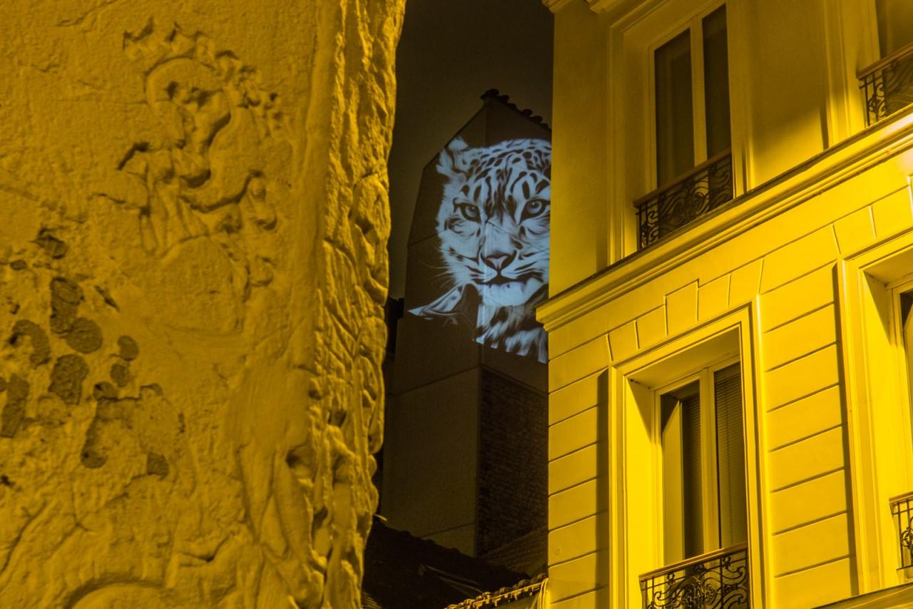 safari-projection-urbaine-paris-16
