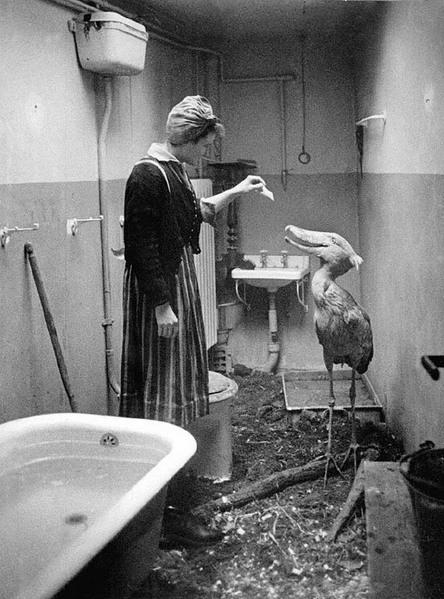 zoo-berlin-zoom-guerre-mondiale