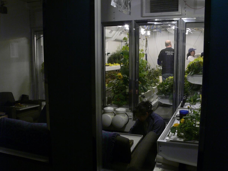Des chambres de croissance permettent au personnel de manger une salade fraîche tous les quelques jours pendant l'hiver - Lane Patterson