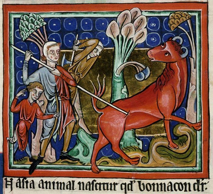 bonacon-animal-mytique-moyenage-02