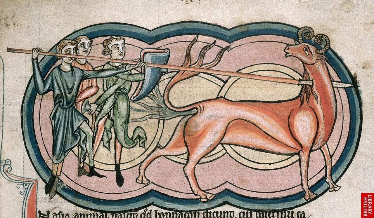 bonnacon-animal-mytique-moyenage-05