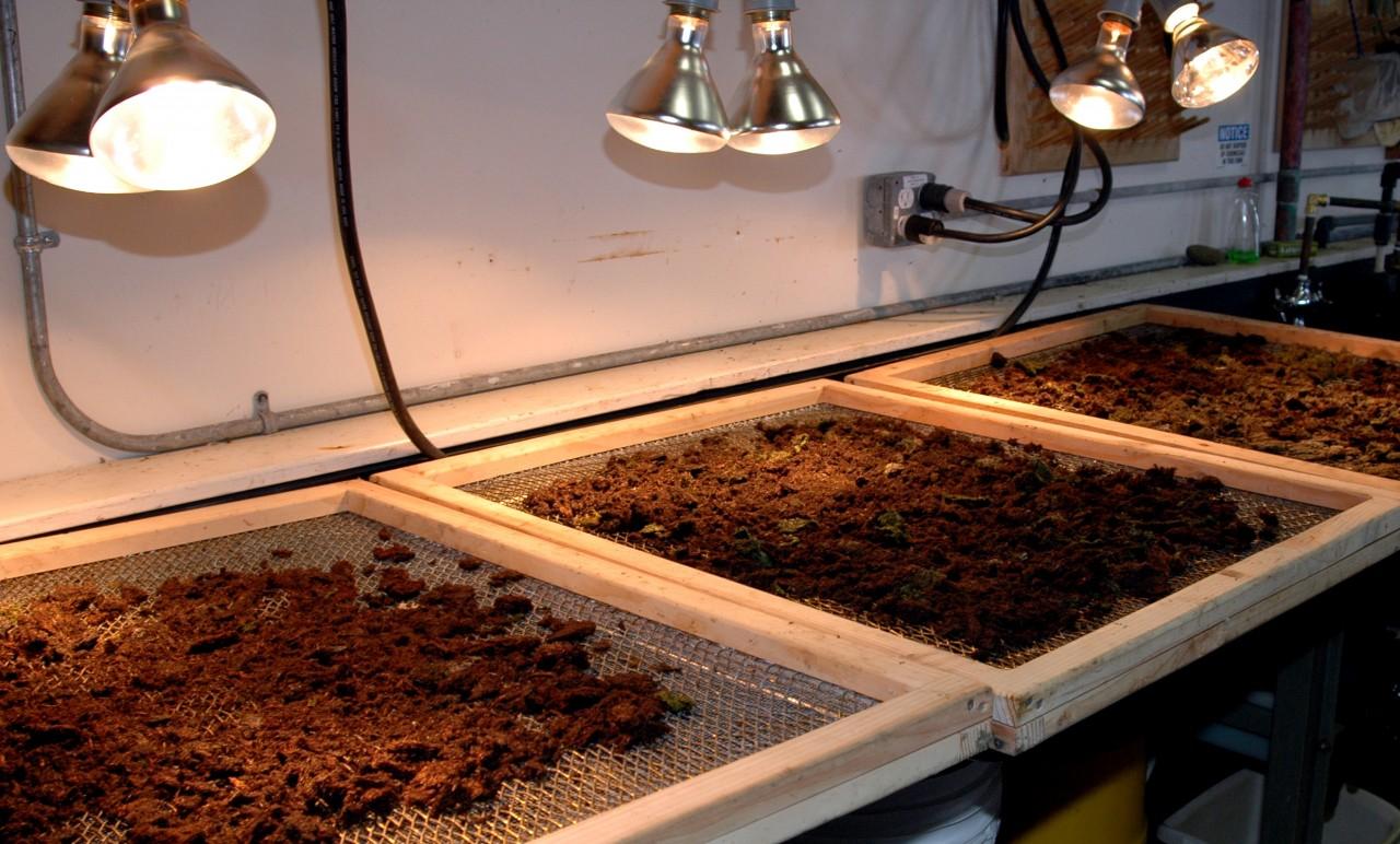 Des lampes chauffent des échantillons de terre pour en faire tomber des insectes à étudier - Peter Rejcek