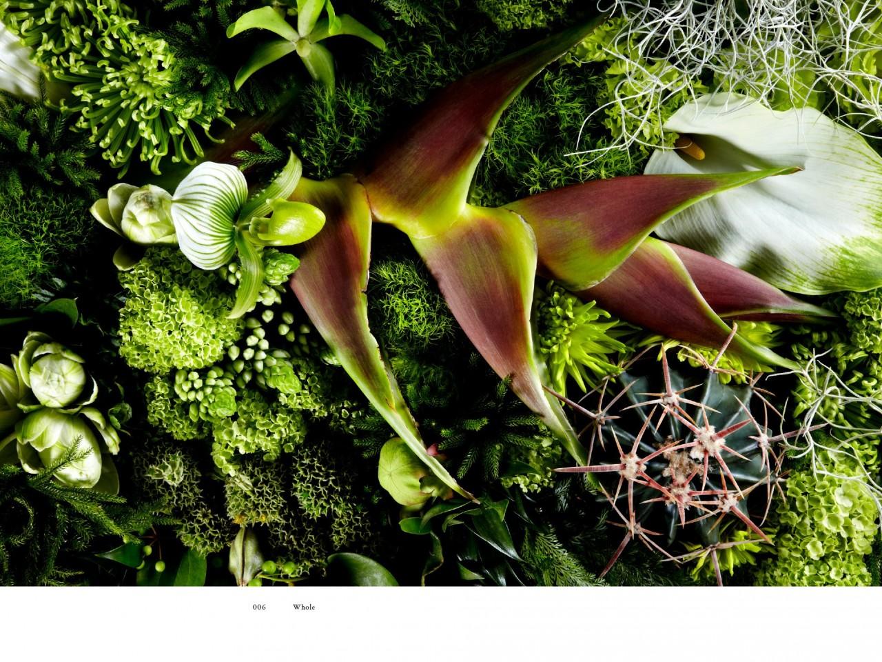 encyclopedie-fleurs-02