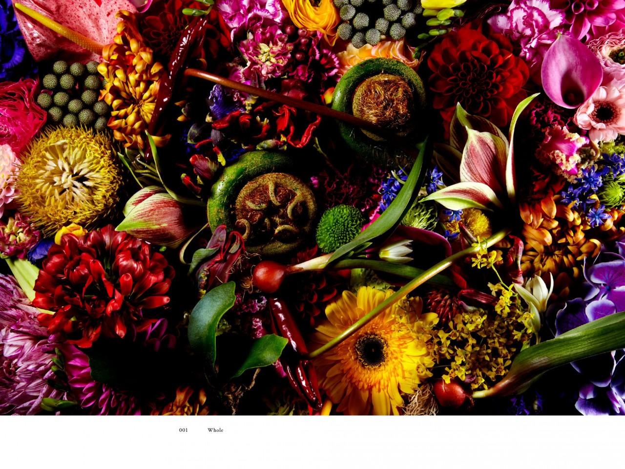 encyclopedie-fleurs-03