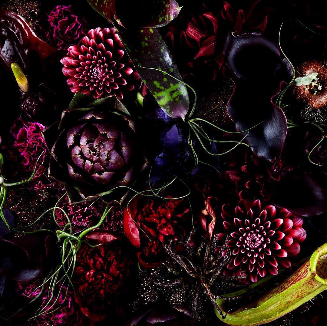 encyclopedie-fleurs-07