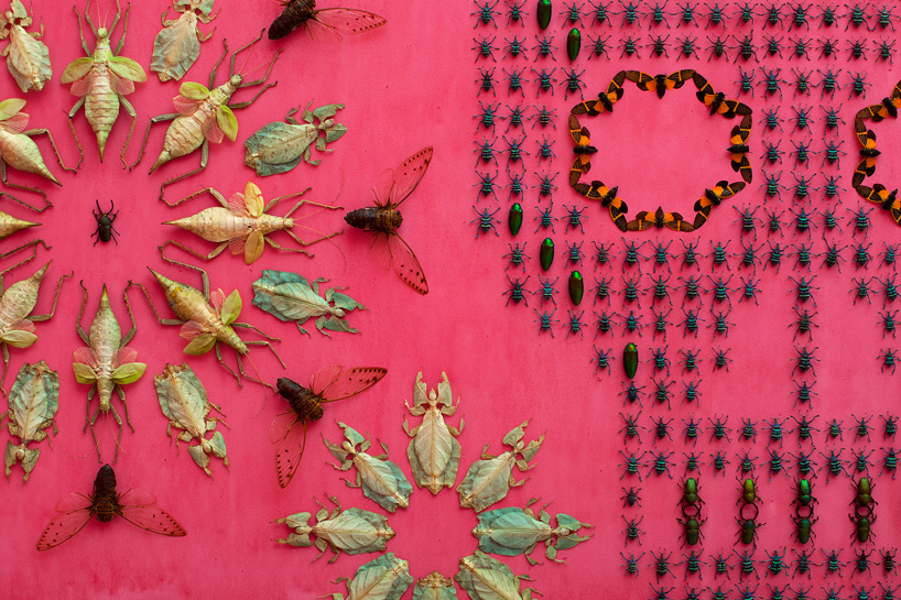 insecte-mur-installation-04