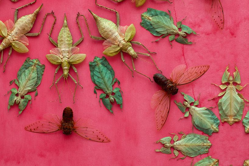 insecte-mur-installation-05