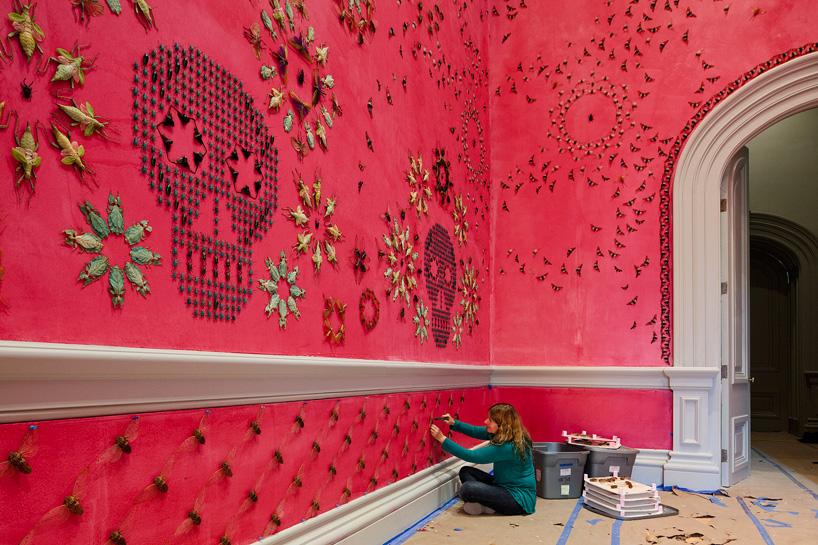 insecte-mur-installation-06