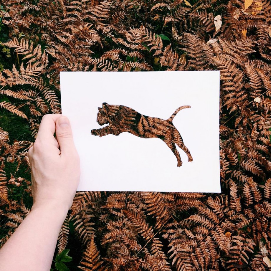 silhouette-animal-nature-04