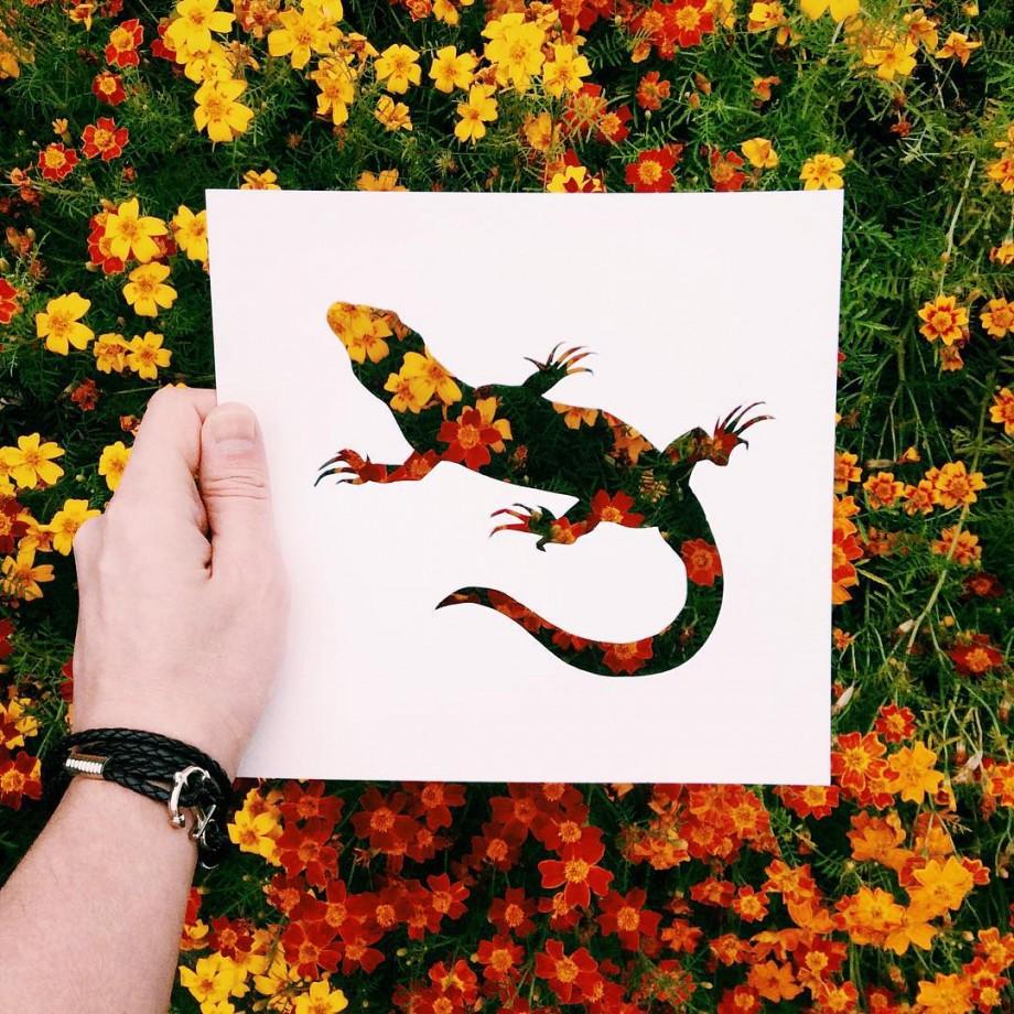 silhouette-animal-nature-05