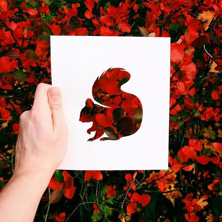 silhouette-animal-nature-06