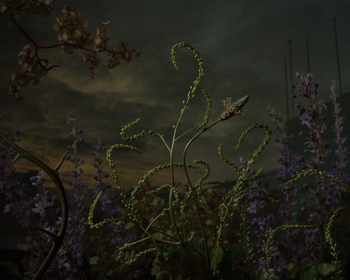 daniel-shipp-fleurs-02