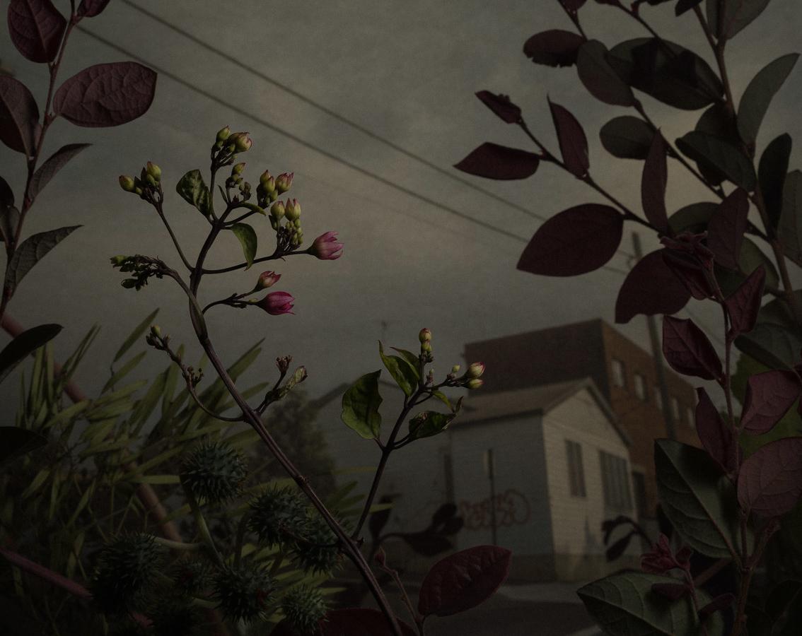 daniel-shipp-fleurs-03