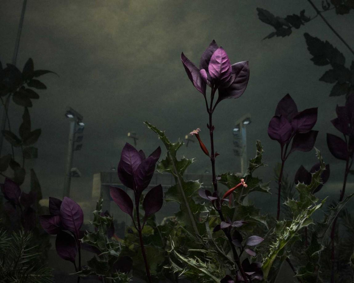 daniel-shipp-fleurs-04