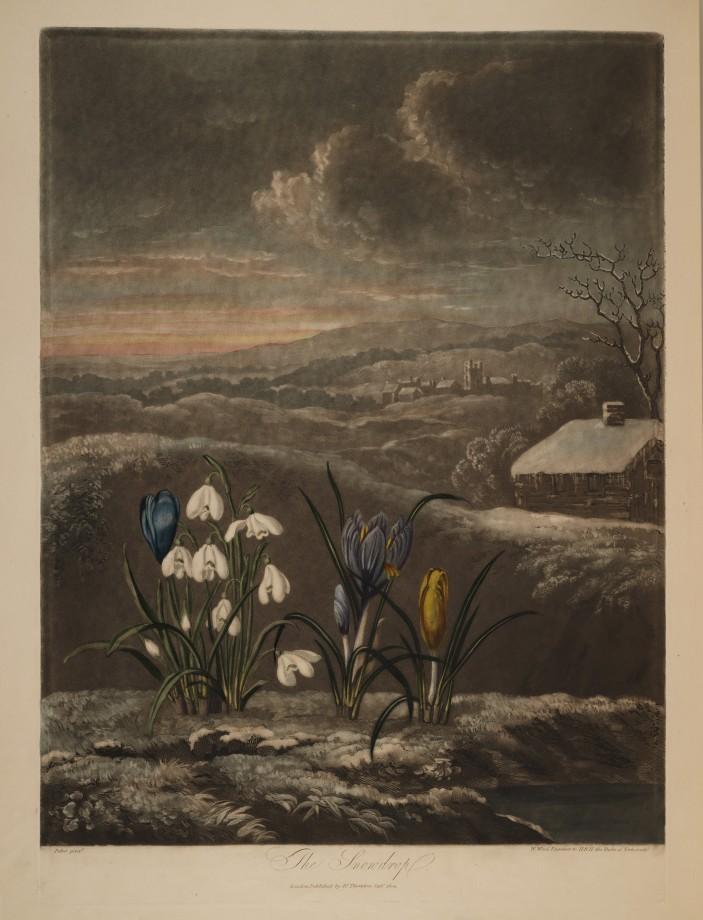 temple-fleur-illustration-Robert-Thornton-02
