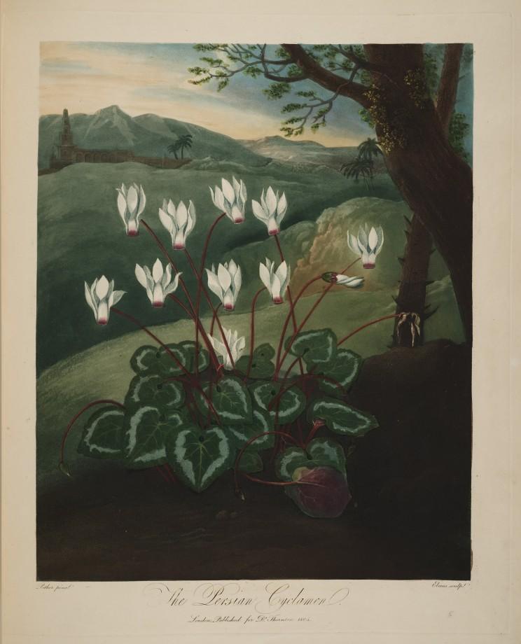 temple-fleur-illustration-Robert-Thornton-04
