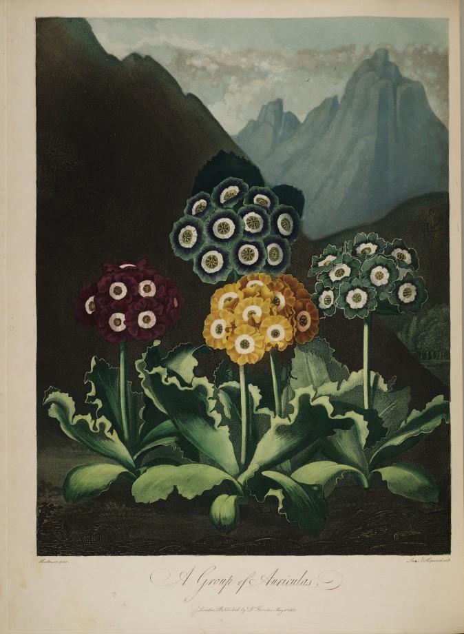temple-fleur-illustration-Robert-Thornton-07