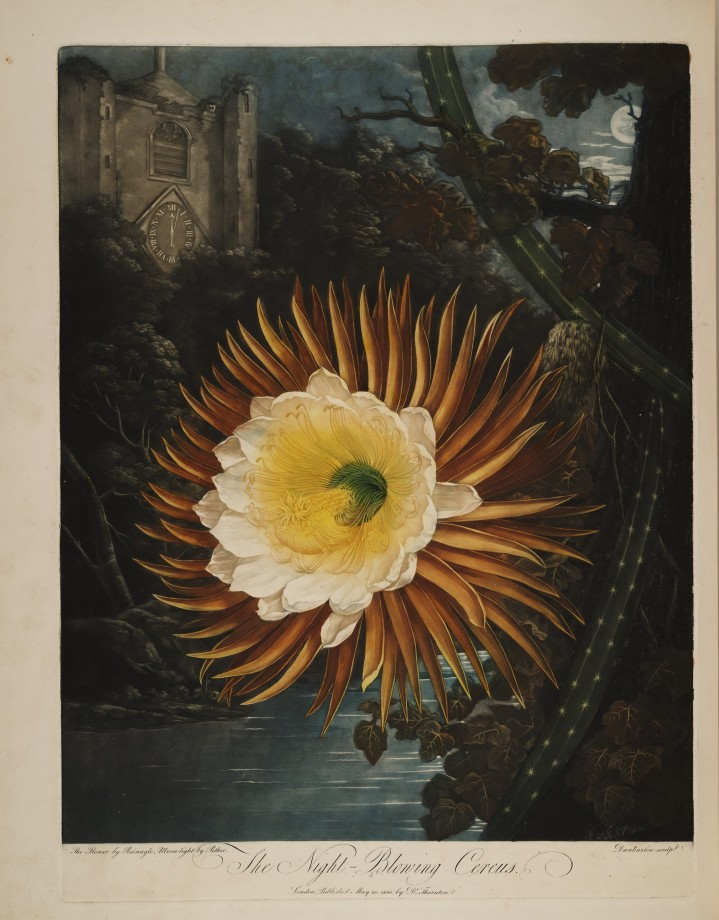 temple-fleur-illustration-Robert-Thornton-10