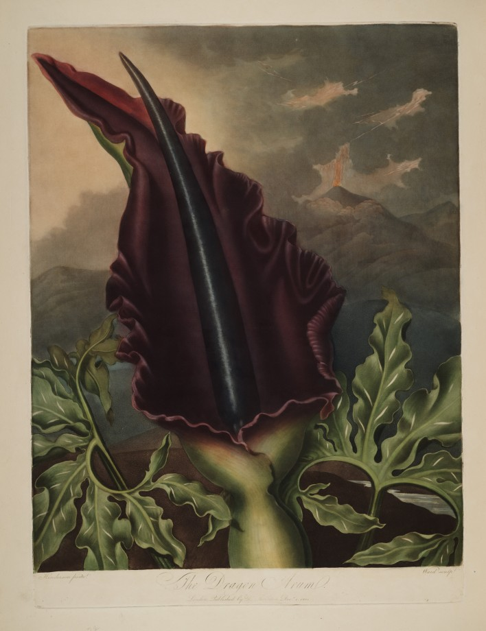 temple-fleur-illustration-Robert-Thornton-14