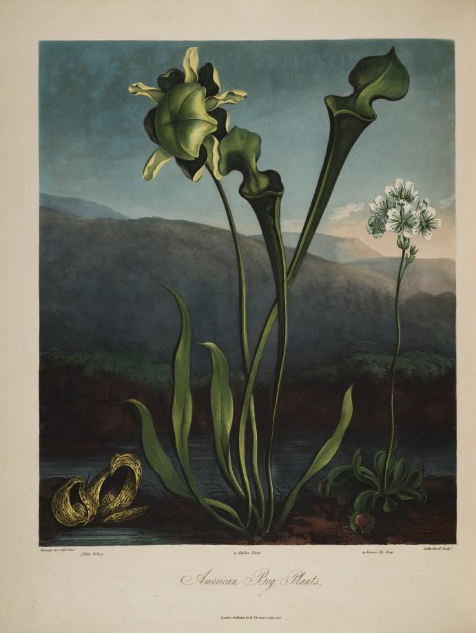 temple-fleur-illustration-Robert-Thornton-18