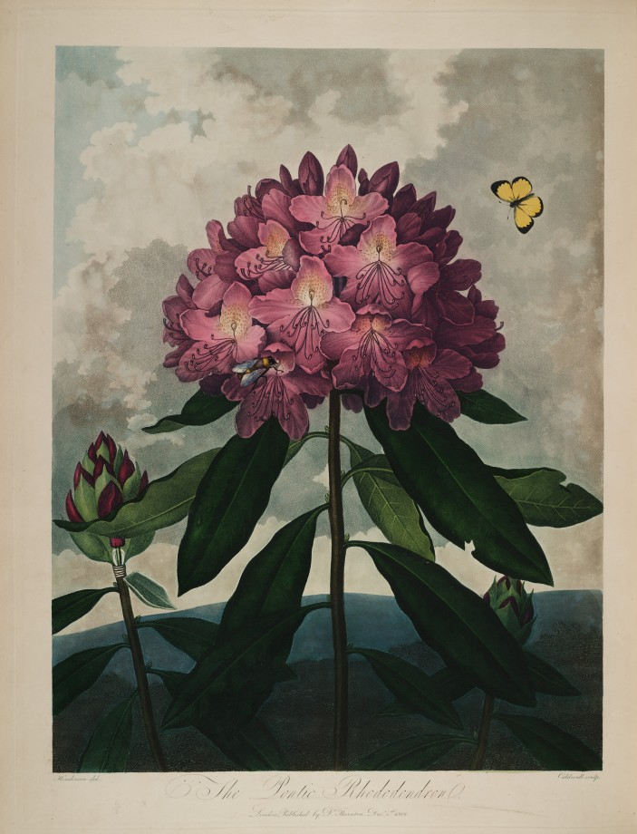 temple-fleur-illustration-Robert-Thornton-19
