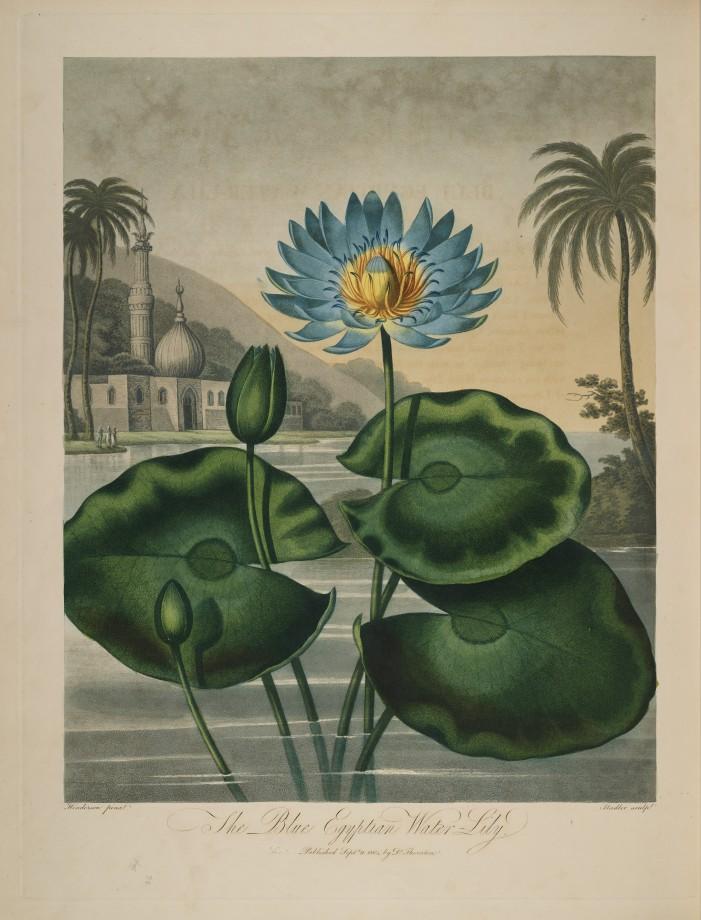 temple-fleur-illustration-Robert-Thornton-22