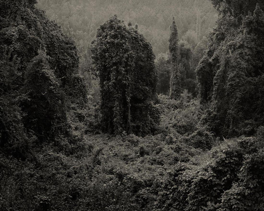 Kudzu-invasion-01