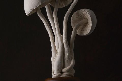champignons-textiles-01