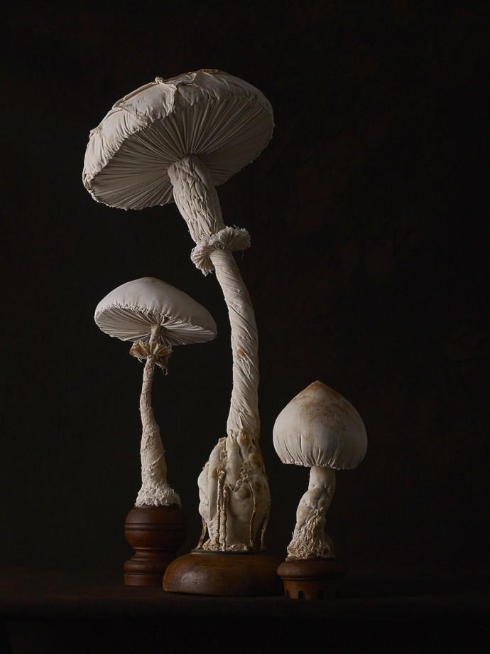 champignons-textiles-02
