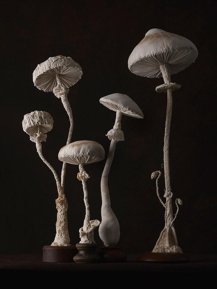 champignons-textiles-04