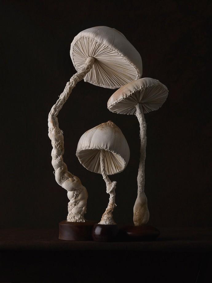 champignons-textiles-05