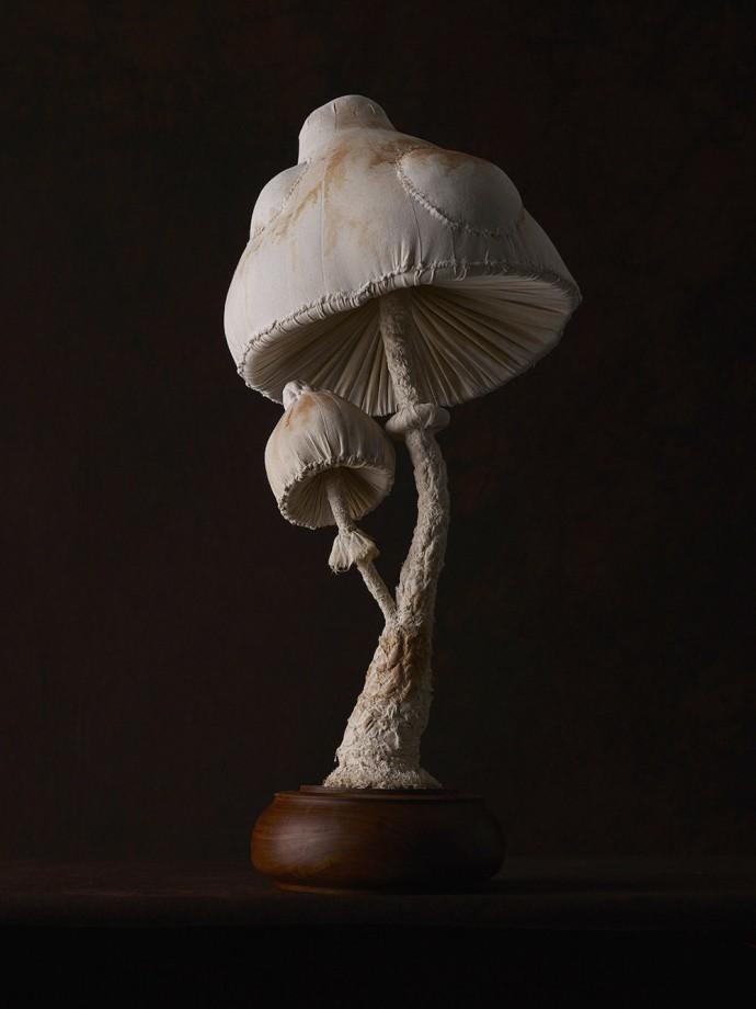 champignons-textiles-06