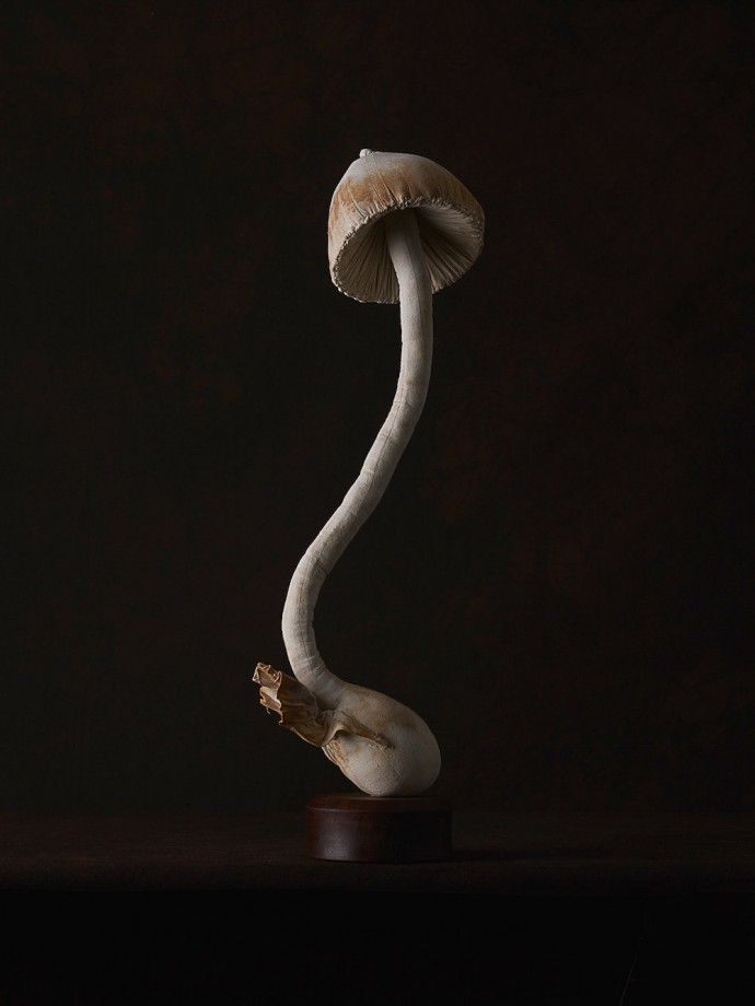 champignons-textiles-07