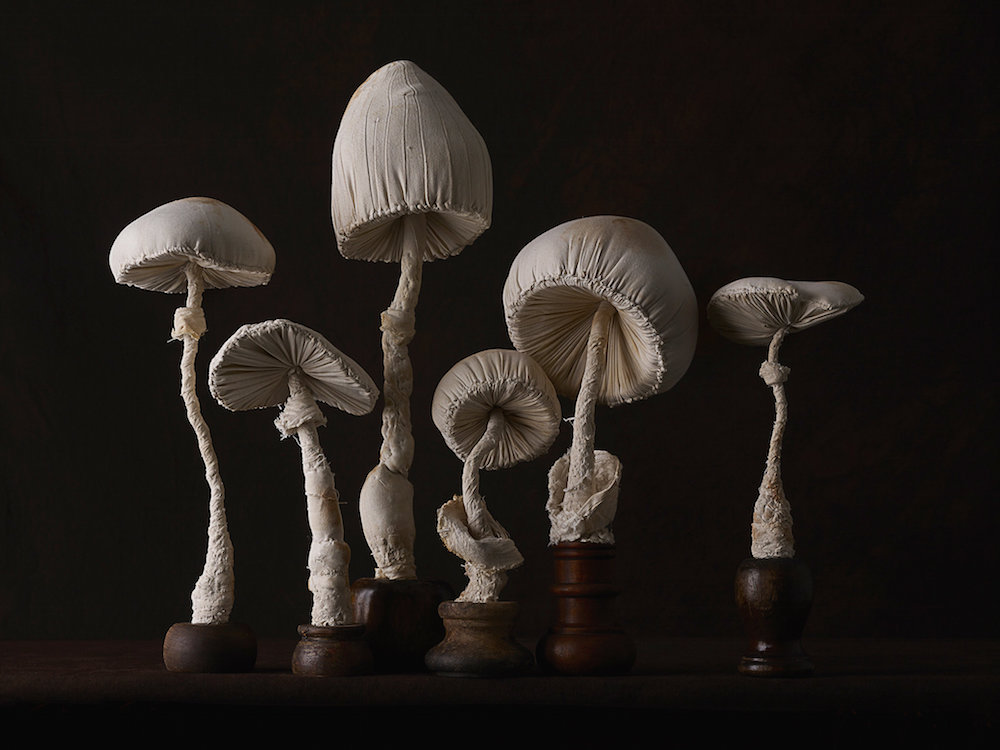 champignons-textiles-09