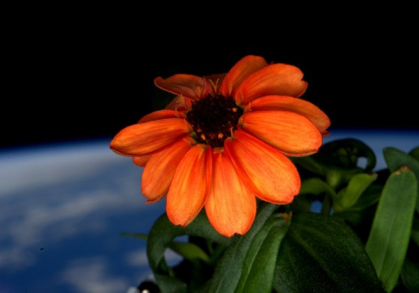 premiere-fleur-espace-01